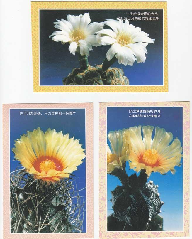 花卉明信片 美的启迪 中国画报出版公司出版 人民画报社发行 1990年代